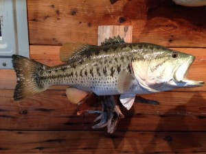 LARGEMOUTH BASS #118