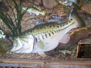 LARGEMOUTH BASS #124