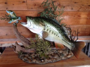 LARGEMOUTH BASS SCENE