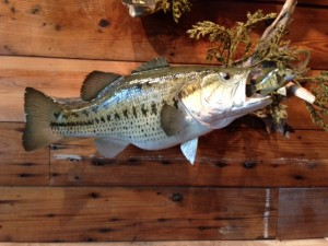 LARGEMOUTH BASS #43