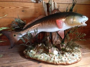 redfish scene